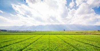 A RIQUEZA DOS SOLOS: UM IMPORTANTE CAPITAL NATURAL CAPAZ DE PROPORCIONAR VIDA PARA O FUTURO DO NOSSO PLANETA